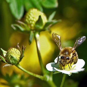 Biodiversitet i haven (Event) @ Naturplanteskolen | Hedehusene | Danmark