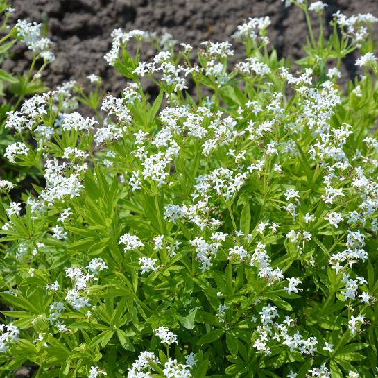 Spiselige planter og blomster