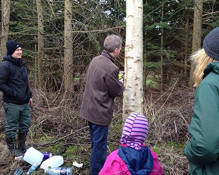 Tapning af birkesaft på Naturplanteskolen