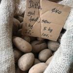 Læggekartofler - Ditta