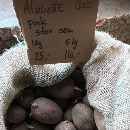Læggekartofler - Alouette