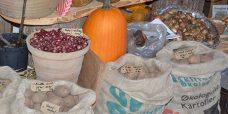 læggekartofler-1-450