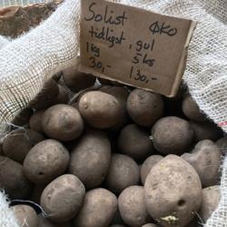 Læggekartofler - Solist