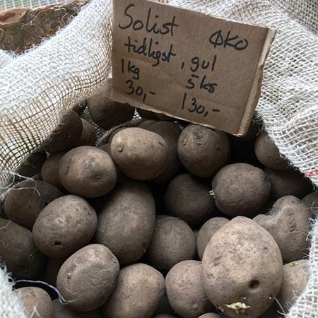 Kartoffel solist