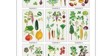 Grøntsager-Sædskifte-plakat-450