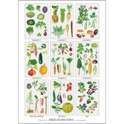 Plakat fra Koustrup - sædeskift grøntsager