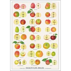 Plakat med smagfulde æbler fra Koustrup.