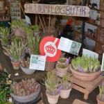 Økologisk løgbutik