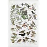 Viskestykke med havens fugle fra Koustrup - Køb på Naturplanteskolen