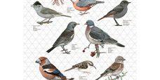 viskestykke-fugle-grå-450