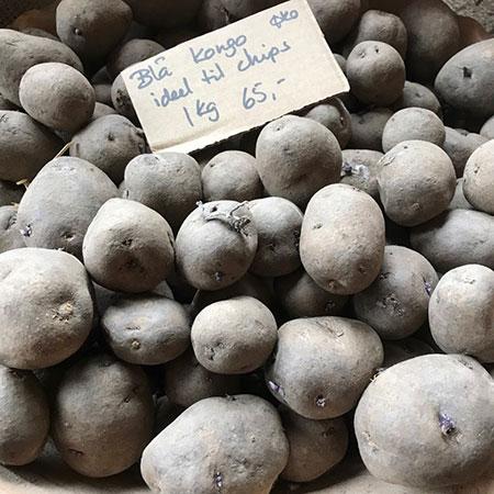 Læggekartofler - Blå Kongo