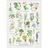 Plakat med giftige planter