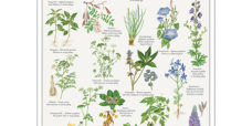 Giftige planter plakat-koustrup-450