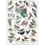 Plakat med havens fugle
