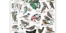Havens-fugle-plakat-koustrup-450