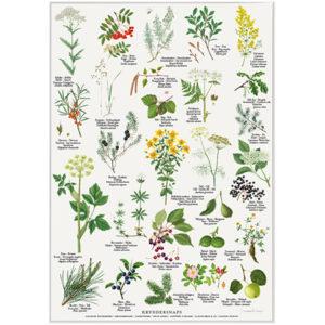 Plakat med planter til kryddersnaps