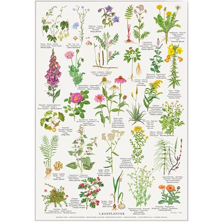 Plakat med lægeplanter