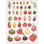 Plakat med Tomater