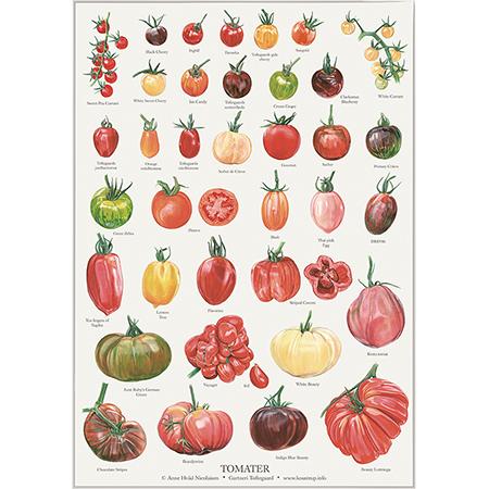 tomater-plakat-koustrup-450