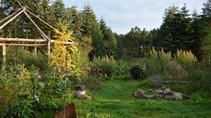 Skovhave - Naturplanteskolen