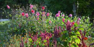 Blomster på Naturplanteskolen