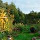 Skovhave på Naturplanteskolen