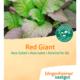 Asia salat - Naturplanteskolen