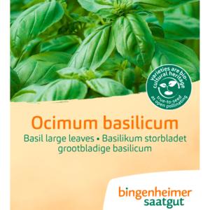 Basilikum, storbladet fra Naturplanteskolen