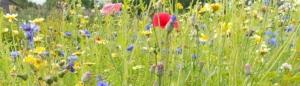 Frøblandinger fra Naturplanteskolen