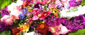 Spiselige blomster og Fantasilater på Naturplanteskolen