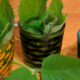 Planteformering på Naturplanteskolen