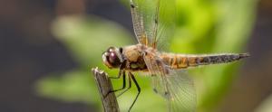 Biodiversitetsdage på NPS