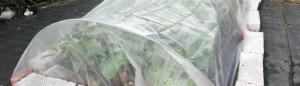 Insektenet på Naturplanteskolen
