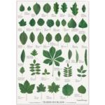 Plakat - Træernes blade (A2)